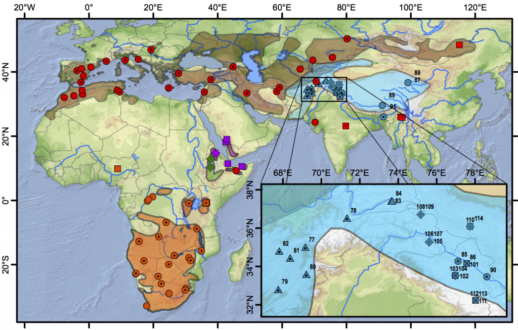 Figure 3 (from Stervander et al. 2016). Distribution map and sampling locations. Samples are denoted with coloured symbols; plain symbols represent full (or long) sequences of cytochrome b, symbols with a central dot represent samples sequenced for 300–400 basepairs (bp), and symbols with crosses represent samples sequenced for c. 100 bp. Distribution of resident Calandrella cinerea (orange; clade E circles, clade D squares), C. erlangeri (green diamonds), and C. blanfordi (purple; clade F diamonds, clade G squares), breeding distribution of C. brachydactyla (brown; clade A red circles, clade C red squares) and C. acutirostris (blue; clade B1 circles, clade B2 triangles, clade B3 diamonds, clade B4 squares). Clade names refer to Fig. 3 in Stevander et al. (2016). In the inset, the region holding four distinct C. acutirostris clades is shown (sample numbers refer to Table S2). Distribution data from BirdLife International and NatureServe (2014) modified for C. erlangeri and C. blanfordi according to Ryan (2004) and for eastern C. brachydactyla based on Gombobaatar and Monks (2011) and unpublished personal studies (which primarily exclude the Tibetan plateau from the previously assumed breeding range).